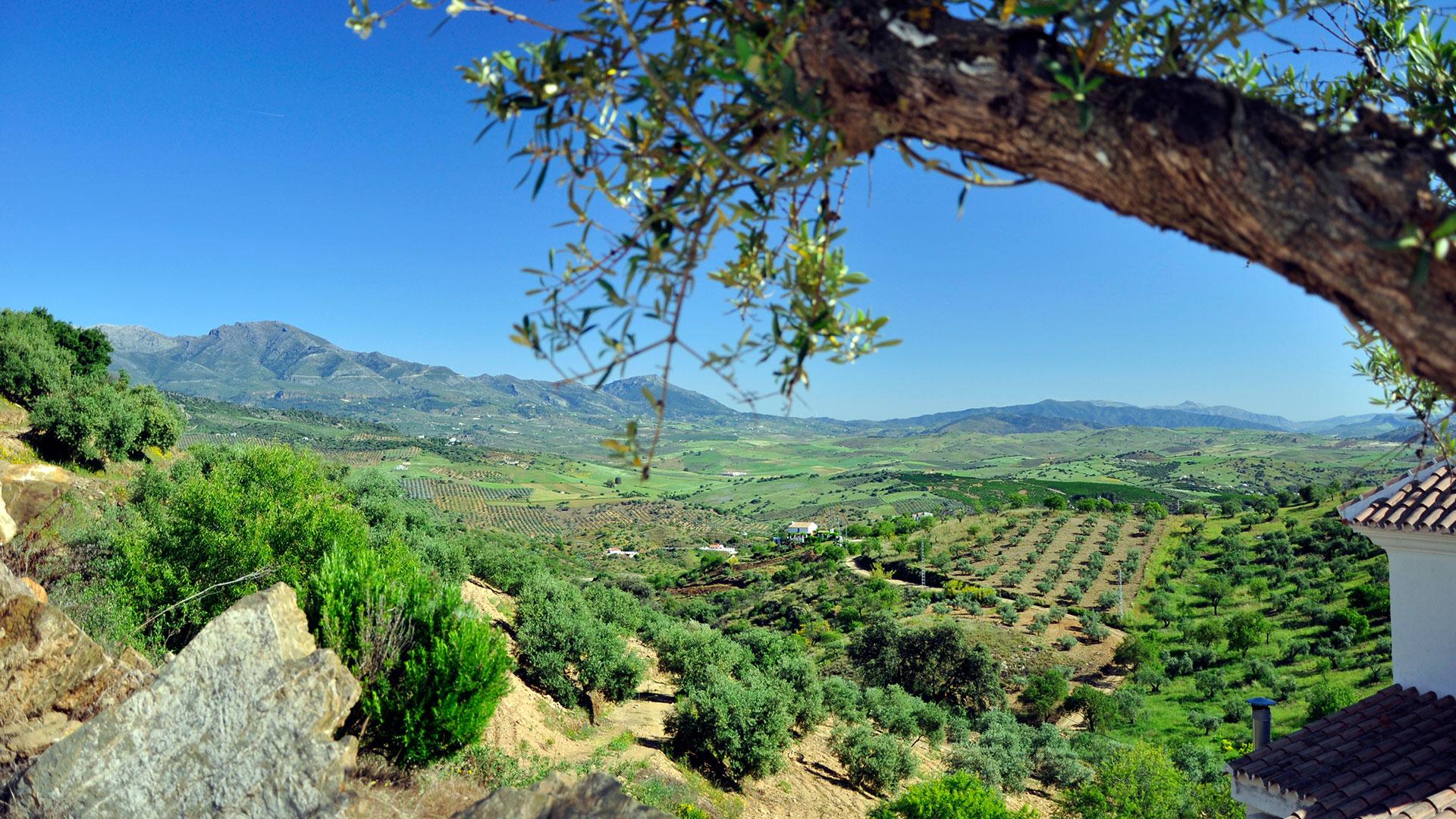 Vakantie in Spanje Malaga